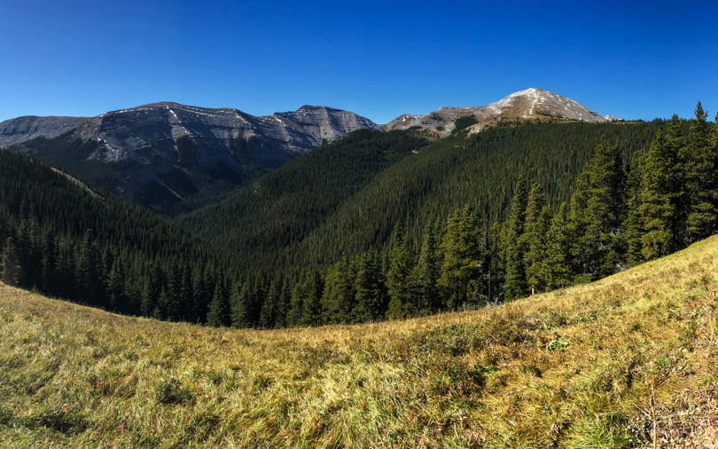 En route to the fire lookout, there's a beautiful meadow
