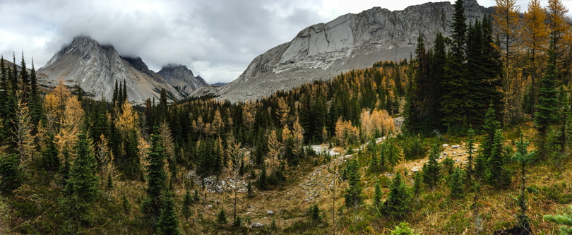 LARCHES! Oh man. So. Beautiful.